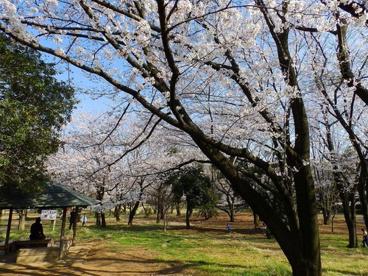 菅生緑地の画像1