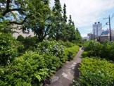 練馬いちょう並木緑地