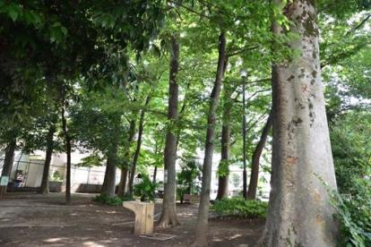宮前けやき緑地の画像1