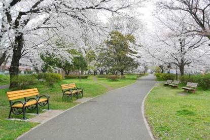 善福寺川緑地の画像1