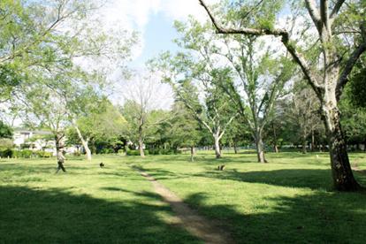 善福寺川緑地公園の画像1