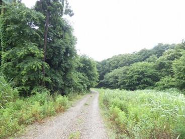 桜木町緑地の画像1