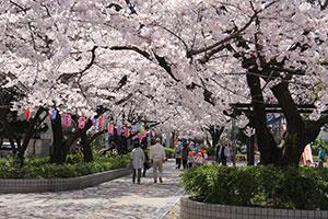 大井水神公園の画像1