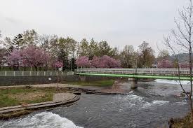 発寒河畔公園の画像1