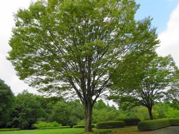 長岡公園の画像1