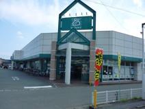 サニー 桜木店