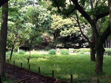 砧五丁目小緑地の画像1