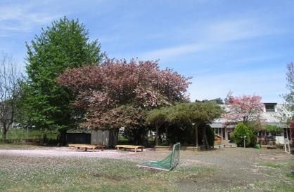 茶々保育園の画像1