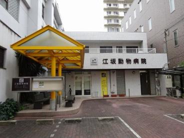 江坂動物病院の画像1