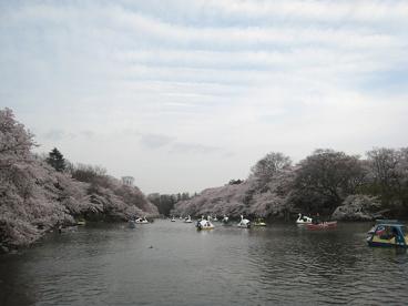井の頭公園の画像1