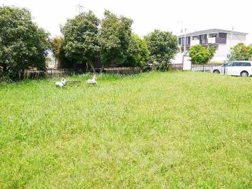 菅原町西公園の画像3