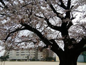 松戸市立金ケ作小学校の画像1
