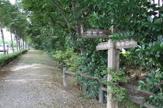 千川上水緑道