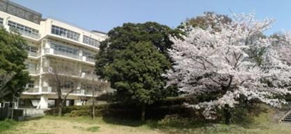 港区立高松中学校の画像1