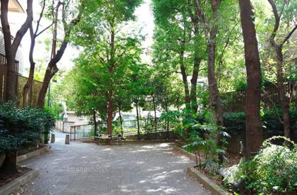 薬園坂緑地の画像1