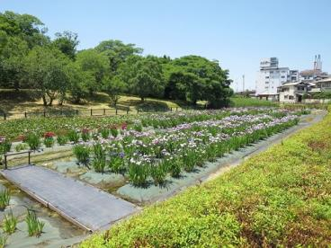 城山古墳史跡公園周濠花菖蒲園の画像1