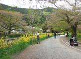 東山自然緑地