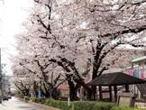 桜並木公園