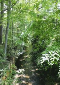玉川上水緑道の画像1