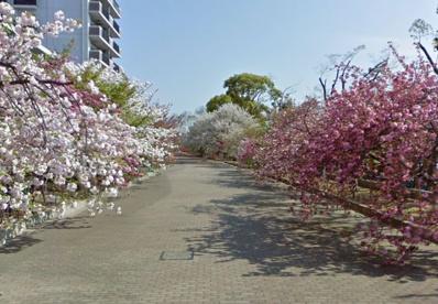 造幣局 桜の通り抜けの画像1