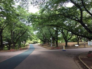 狭山稲荷山公園の画像1