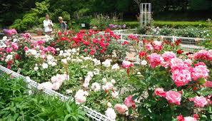 横浜市こども植物園の画像1