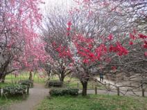 越谷梅林公園