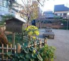 街道松の広場