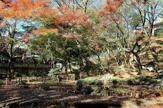 新宿区立下落合野鳥の森公園