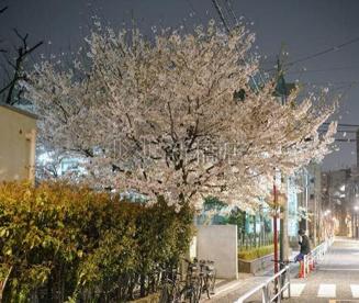 柳北公園の画像1