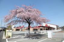 昭島すみれ幼稚園