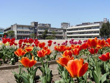 仁王小学校の画像1