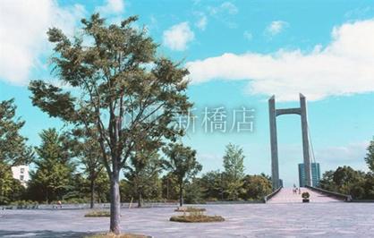 木場公園の画像1