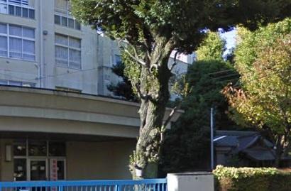 関口台町小学校の画像1