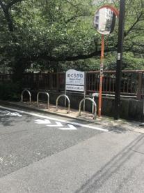 目黒川の桜並木の画像1