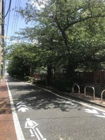 目黒川の桜並木の画像2