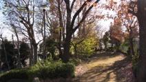 早淵の森緑地