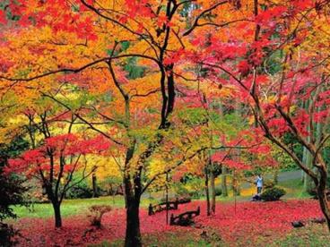 東郷公園の画像1