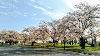 向原中央公園の画像1