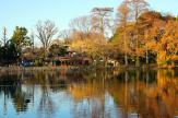 善福寺池 上の池