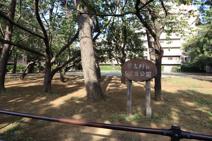 習志野台5丁目公園