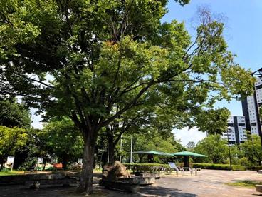 芦屋中央公園の画像1