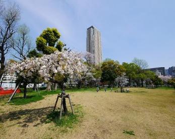 都立青山公園 北地区の画像1