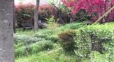 梨の木緑地