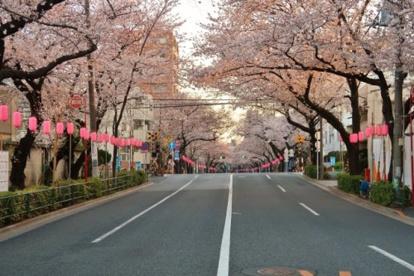 中野通りの画像1