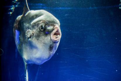 サンシャイン水族館の画像1
