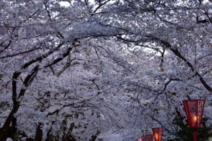 あすか桜坂の画像1