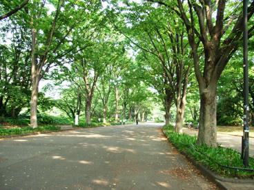 駒沢公園の画像2