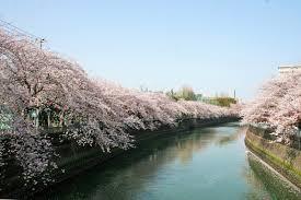大岡川プロムナードの画像1