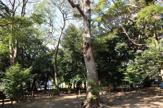 菊田神社・水鳥の池